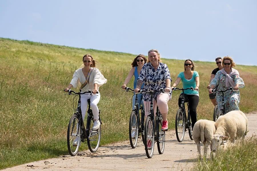 Eine Gruppe fährt Fahrrad auf einem Weg entlang an einem Deich auf dem zwei Schafe laufen